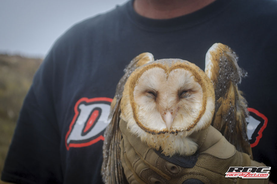 """A regular Jack Hanna, Bryan Bergey aka the """"Owl Whisperer"""" assesses an ailing owl. (Try saying that 5 times fast)"""